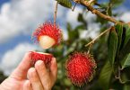 Rambutan_foodguruz.in