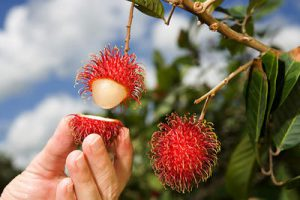 What Is The Weirdest Looking Fruit? 8